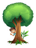 a boy and a tree