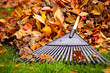 Fall leaves with rake - 47138254