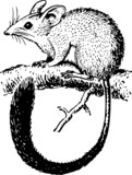 Rodent sitting on the branch of the tree poster