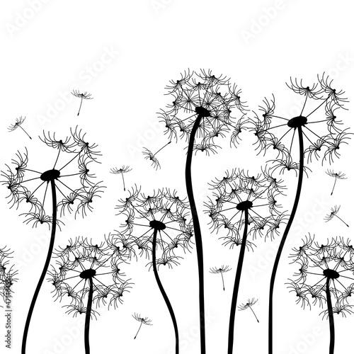 Naklejka vector dandelion
