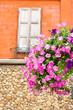 Vertical image of pink Petunia flowers