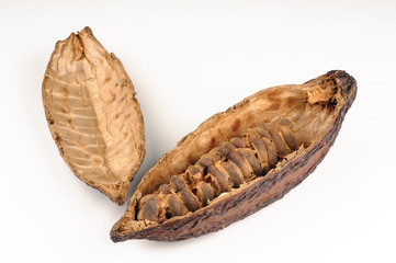 Cocoa fruit on white background