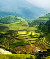 rice field on terraced in mountain. Terraced rice fields in Viet