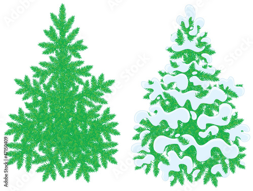 fir-trees, snow-covered and without snow