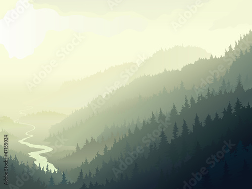 Wild coniferous wood in a morning fog. - 47155024