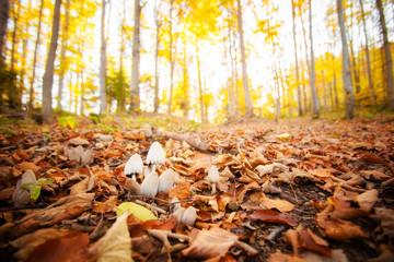 Woods mushrooms detail