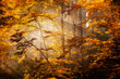 Beautiful autumn woods landscape