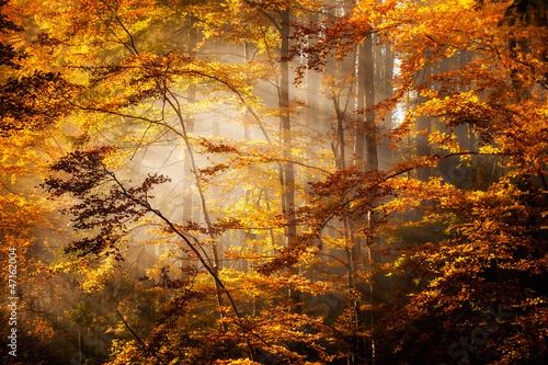 Fototapety, obrazy : Beautiful autumn woods landscape