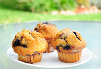 Yummy Blueberry Muffins