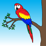 Macaw Parrot Illustration