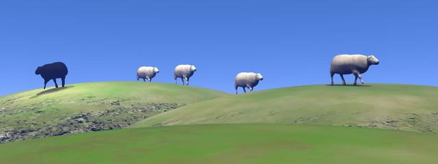 Black sheep - 3D render