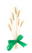 Ears of wheat with green bow isolated on white background