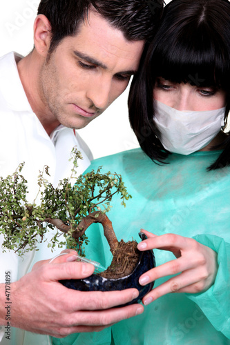 Doctors examining bonsai