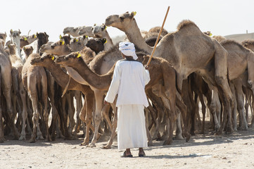 Bedouin trader at an african camel market