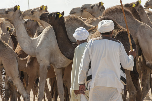 Two bedouin traders at an african camel market