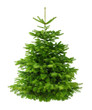 Perfekter dichter Tannenbaum isoliert ohne Schatten - 47190488