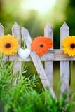 Fototapety Blumen