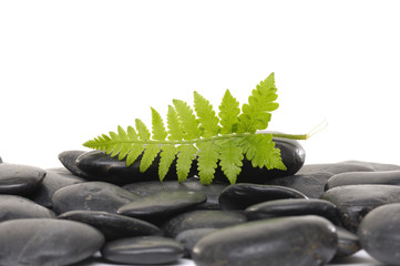 green fern leaf with Pile of pebble Stones