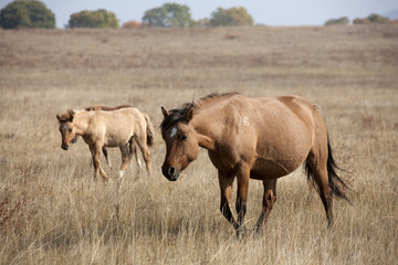 The horse on the prairie