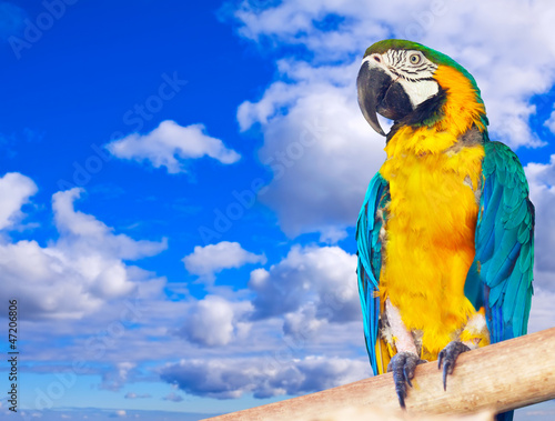 Macaw  against sky