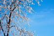 Frosty tree and blue sky