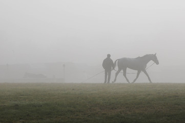 Horse lunging, Blenheim 2012