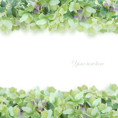 緑系の花上下