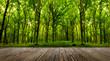 Leinwandbild Motiv forest trees.