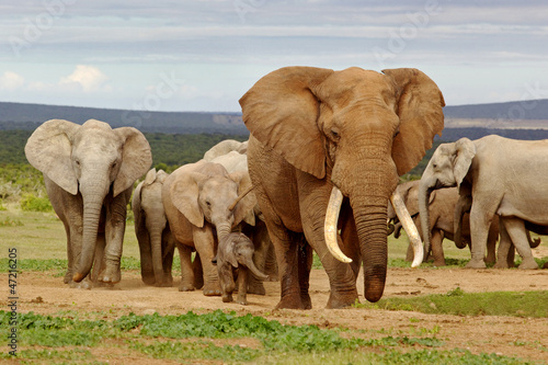 Canvas Zuid Afrika Elephant Herd