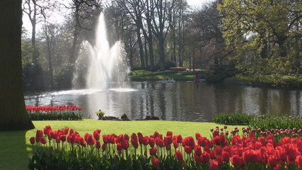 Red tulips and Fountain