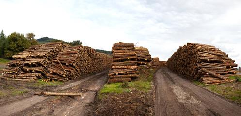 troncos para la industria