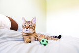 Small Cat with green soccer ball