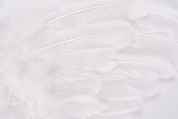 white wing feather texture macro