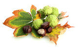 Chestnuts with autumn dried leaves, isolated on white