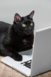 Comical portret of Intelligent successfull black business cat ly