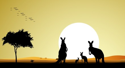 beauty silhouette of kangaroo family with sunset background