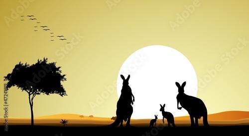 sylwetka, piękno rodziny kangura z tle zachodu słońca