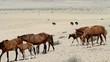 horse herd landscape