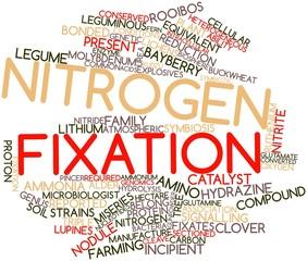 Word cloud for Nitrogen fixation