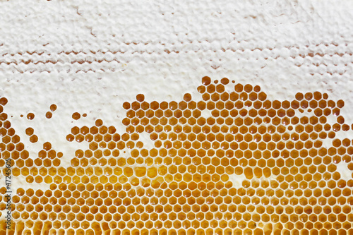 yellow beautiful honeycomb with honey