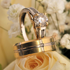 Bridal rings on rose - wedding rings on rose