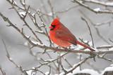 Fototapete Schnee - Natur - Vögel