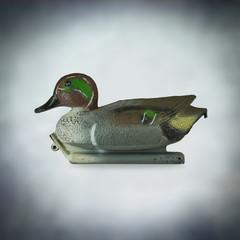 shooting duck