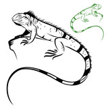 Fototapete Groß - Caribbean - Reptilien / Amphibien