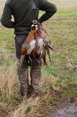 Gamekeeper carrying the pheasants