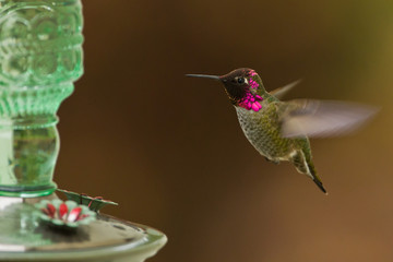 Side view of hummingbird hovering next to a bird feeder.