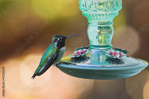 Side view of hummingbird's sitting on a bird feeder.