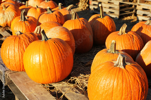 pumpkins on old wood