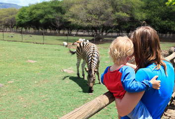 family looking at zebra in Zoo