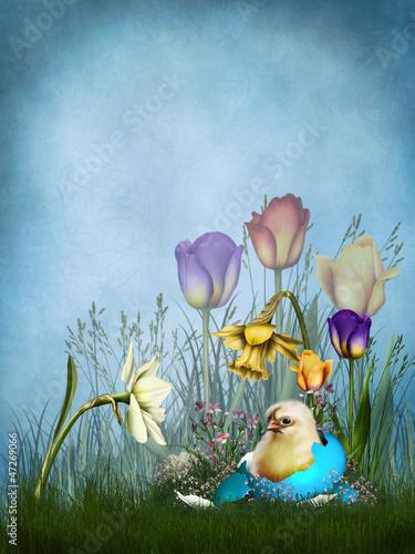 Wiosenne tło z kurczątkiem i kwiatami